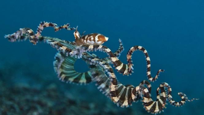 ВБеринговом море пойман новый вид огромный спрутов