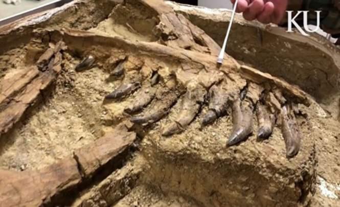 Останки юного тираннозавра найдены вСША